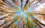 Árboles y bosque