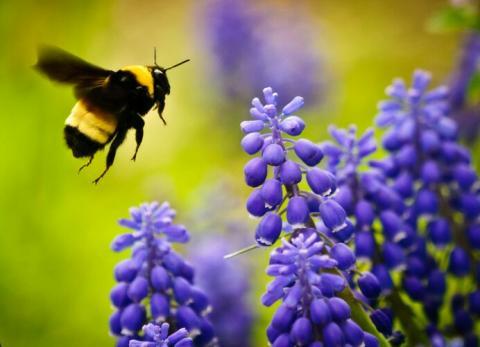 Bee Garden. Premio AIRE. IV Premio Málaga Viva 2021